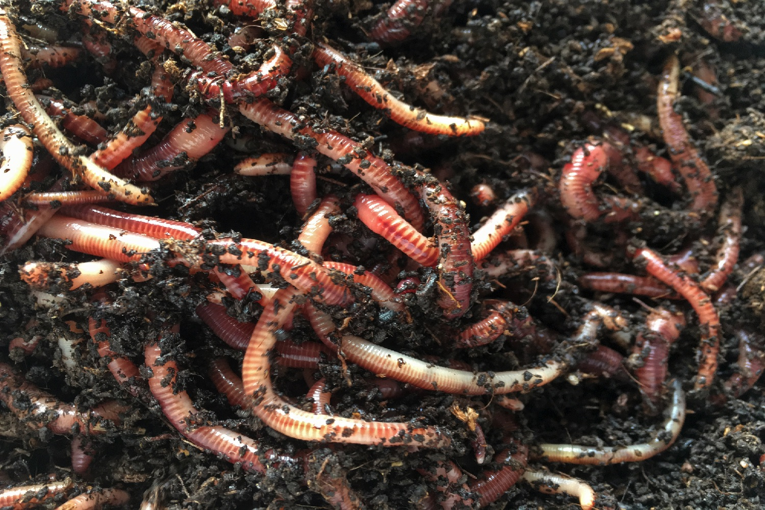 A study of the effects of ph on earthworms