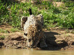 trip pantanal