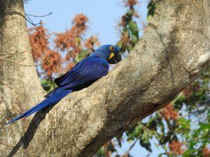 Reisen ins Pantanal