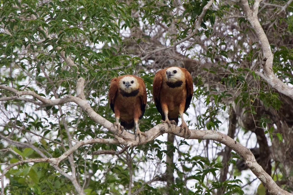 Pantanal Itineraries