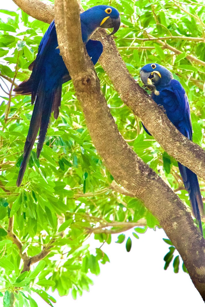 Pantanal travels