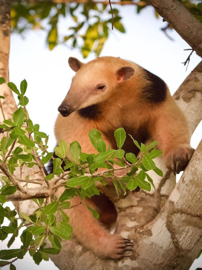 Pantanal Touren