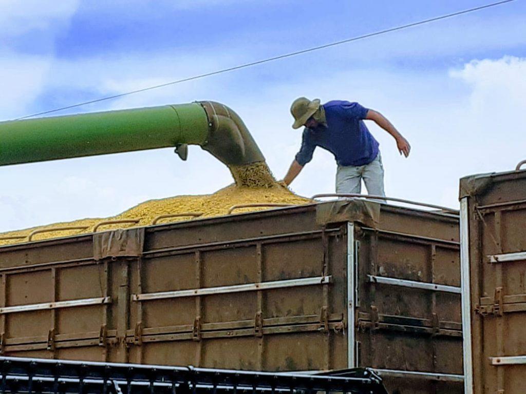 STF decidiu que as operações de exportação indireta, realizadas através de Tradings Companies, estão imunes da cobrança do Funrural.
