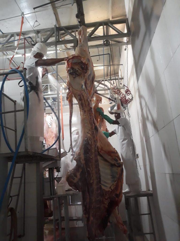 Abatedouro bovino em Canarana.