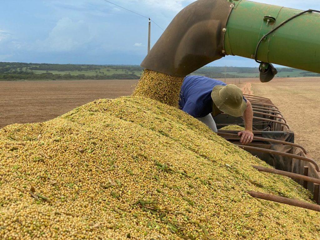 A boa rentabilidade do milho e da soja na safra que se encerra, estimula os produtores a aumentar a área desses grãos no período de 2020/21.