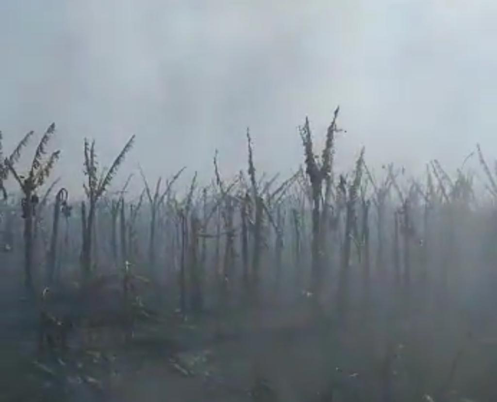 Perda de 45 hectares de bananas, sistema de irrigação destruído, prejuízo de R$ 4 milhões e 25 anos de história consumida por um fogo devastador.
