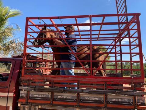 Cavalos-recuperados-Foto-PC-3-1