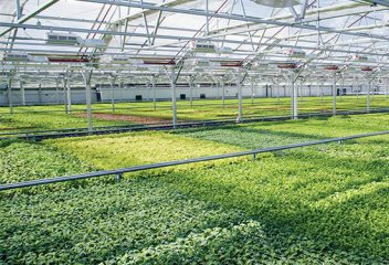 Innovations in Indoor Farming