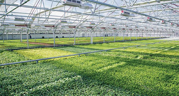 Innovations in Indoor Farming