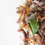Are Insects the Future of Food?