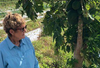 D2D on the Farm: GMOs