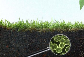 Soil Microbes in the Spotlight