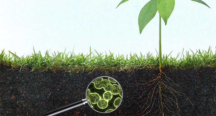 Soil Microbes in the Spotlight