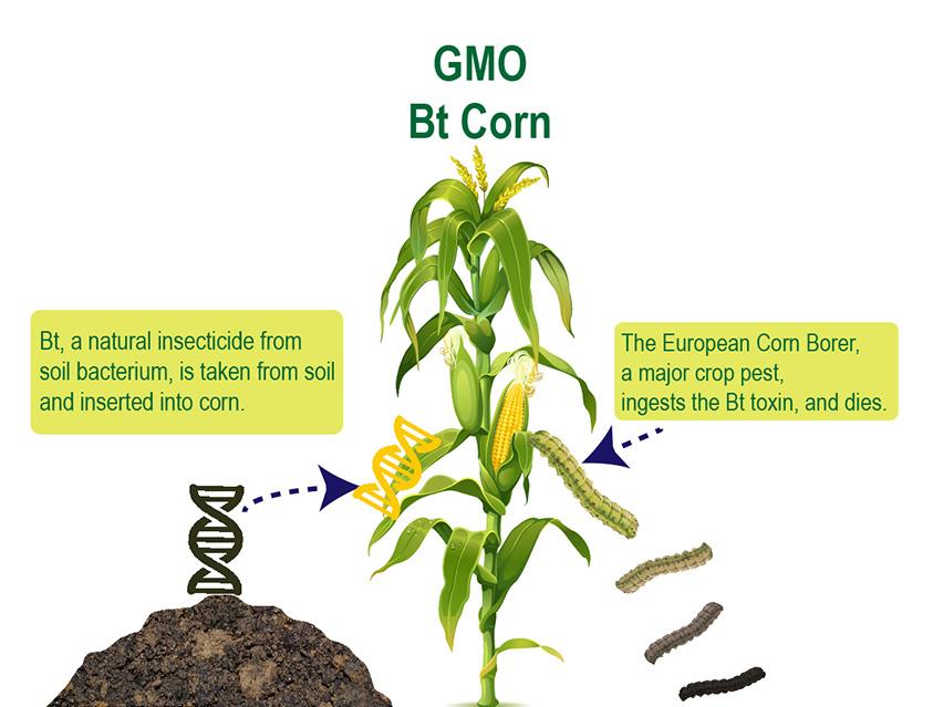 GMO and CRISPR