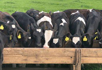 Animal Antibiotics: Should We Be Concerned?