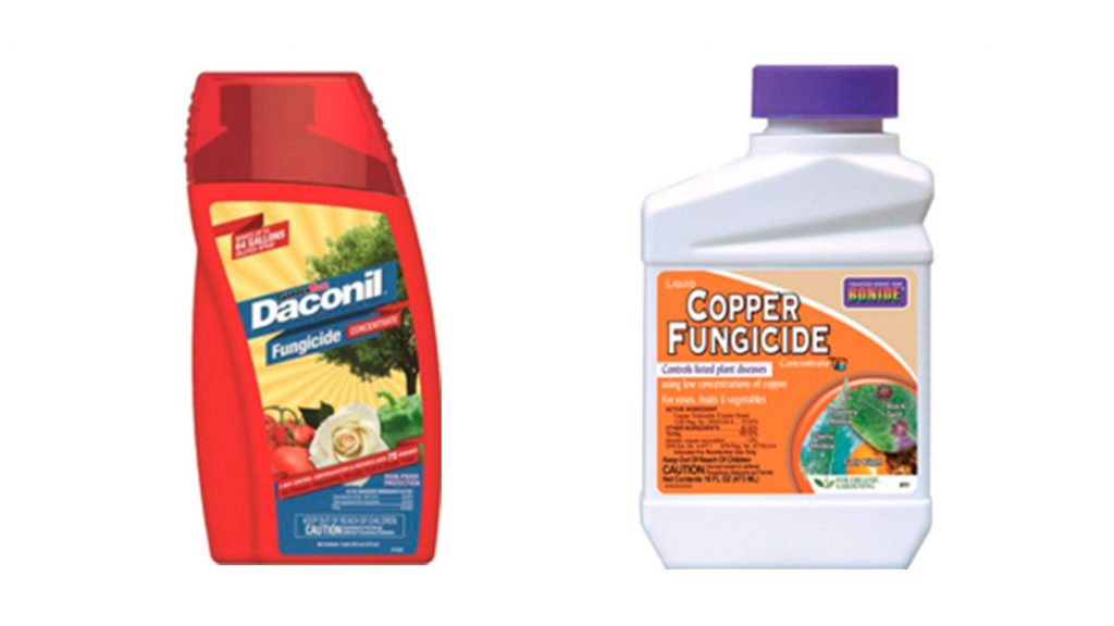 Preparing For Pests: A Gardener's Guide
