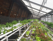 Can Technology Save Urban Farming?