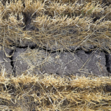 Combating Desertification & Land Degradation