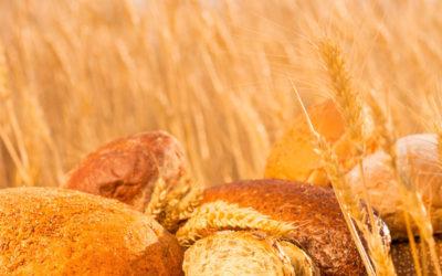 Should We Eat Wheat?