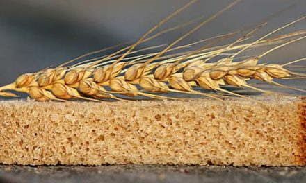 Debunking the Gluten Myth
