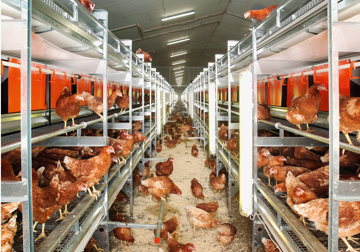 What Is The Difference Between Cage Free And Regular Eggs