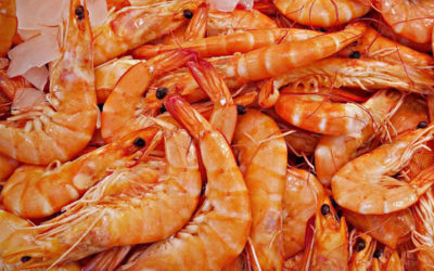 A Sustainable Shrimp's Tail