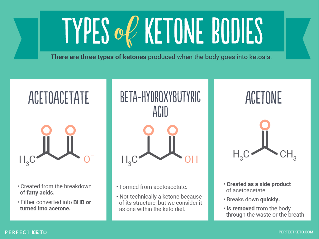 The Ketogenic Diet: Fueling the Body with Fat | Dirt to Dinner
