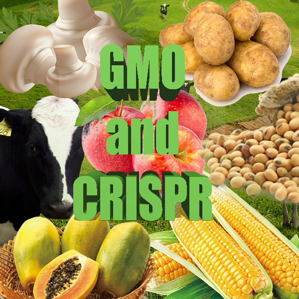 What is the Difference between GMOs and CRISPR?