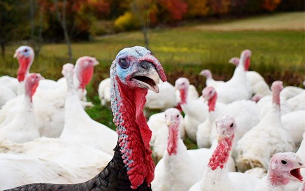 Keep Salmonella Away From Your Thanksgiving Table!