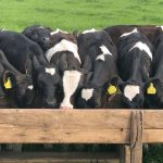 Animal Antibiotics: Should We Be Concerned?