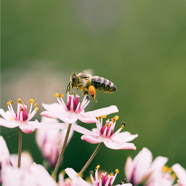 Why Should We Care About Bees?