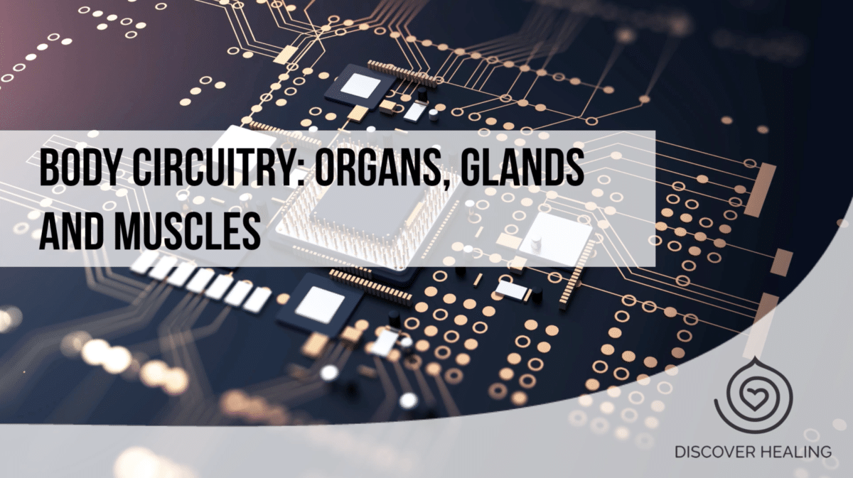 Body Circuitry: Organs, Glands and Muscles