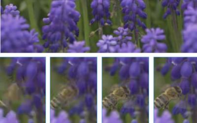 Neural Inter-Frame Compression for Video Coding