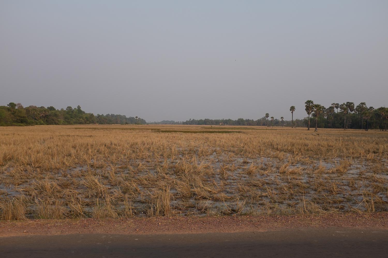 Cambodia Landscaoe
