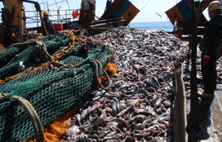 3907975bd0a3 The National Fisheries Institute (NFI) has sued the National Oceanic and Atmospheric  Administration (NOAA) and the Department of Commerce over a recently ...