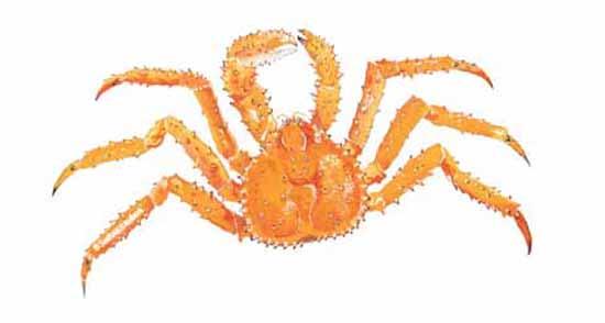 Crab, King