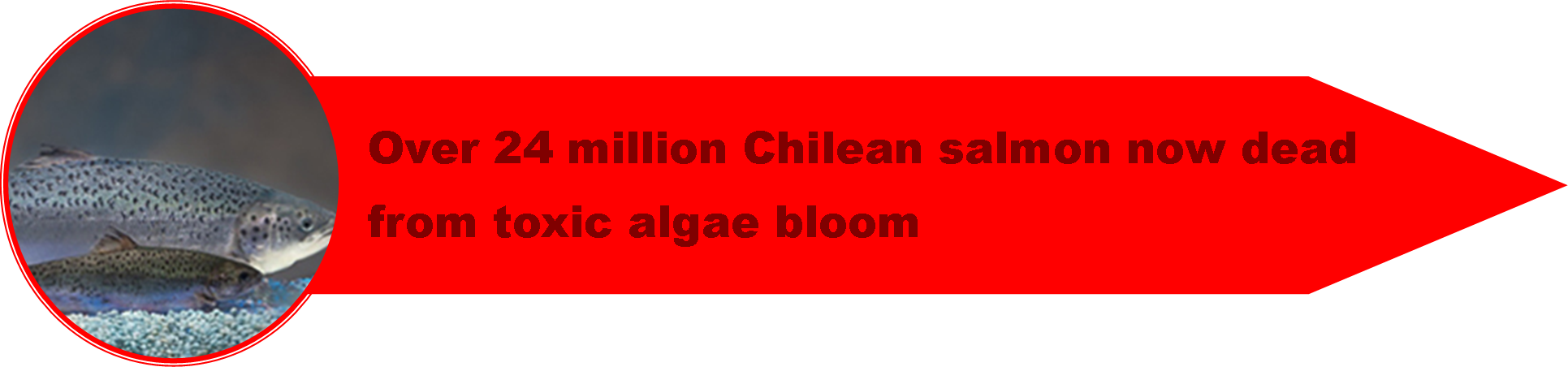 1_Chile_Crisis.png