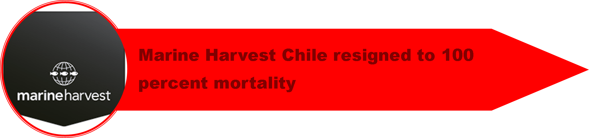 1_Chile_Crisis_5.png
