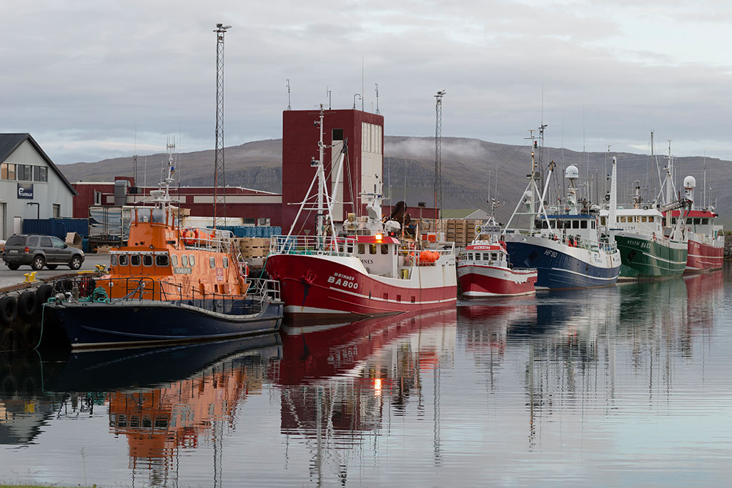 Cod, blue whiting lift Icelandic fleet's landings