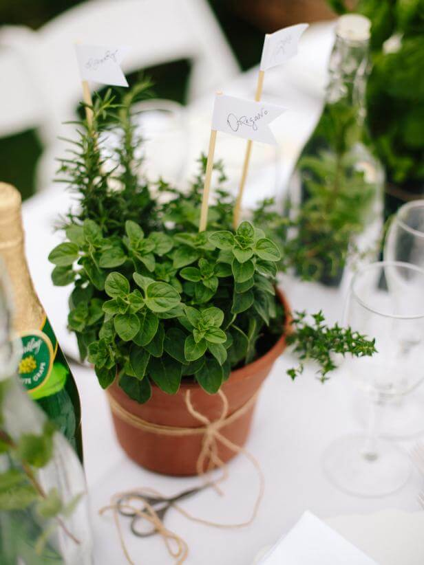 diy adult party favors mini herb gardens for guests