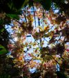 Chandeliers Bloom at the New York Botanical Gardens