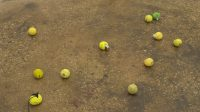 Smuggled into Claire Fontaine's 'Untitled (Tennis Ball Sculpture)'