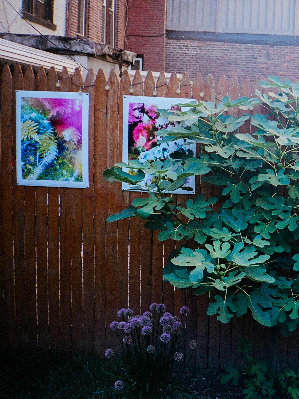 The Great Escape: Inside Karine Laval's intimate Brooklyn backyard photography show