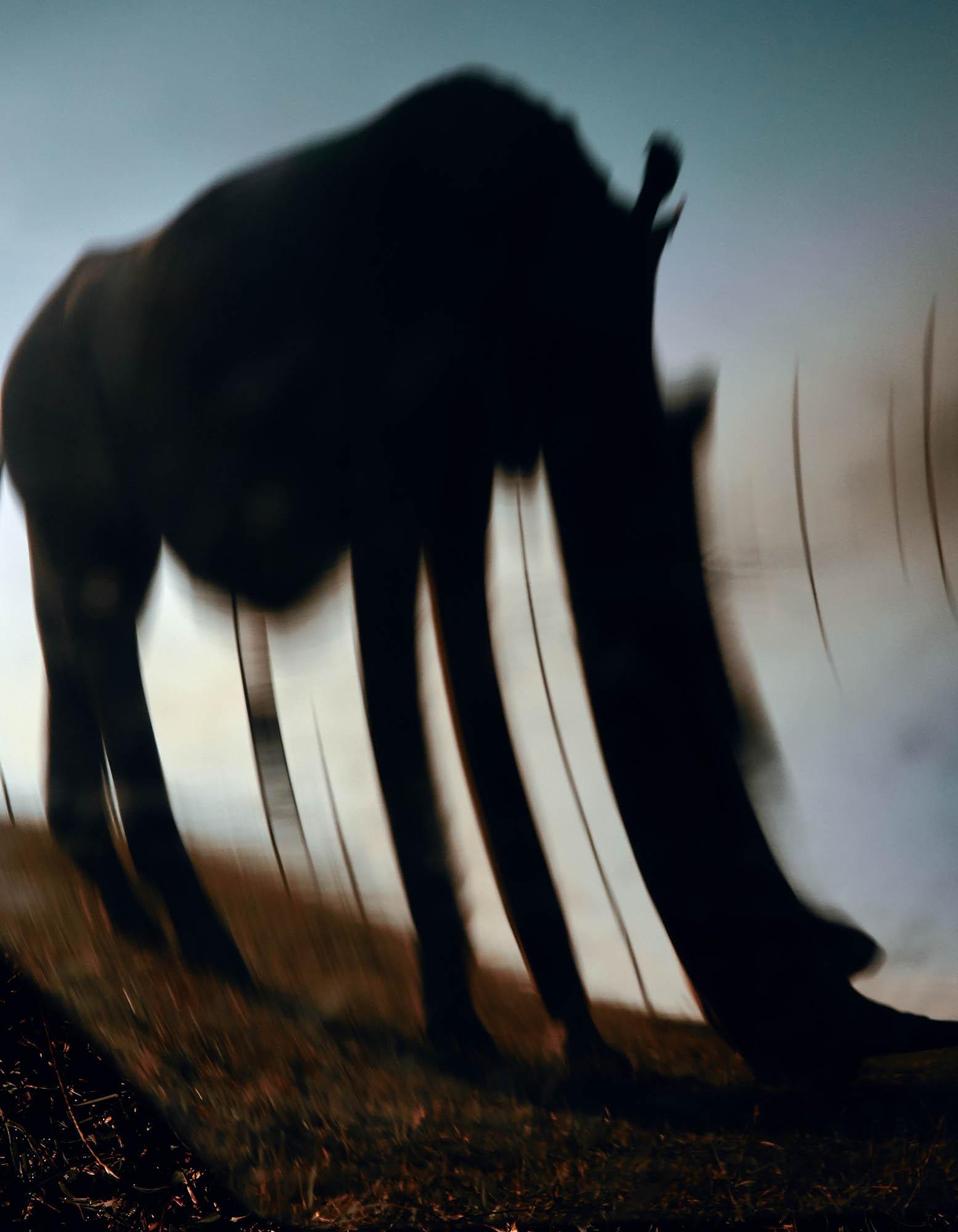 Photographer Jack Davison finds hope in the quiet of extinction