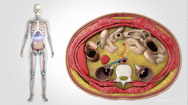 Medical Malpractice Case Utilizes Colorized Images