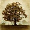 Thumb tree of life