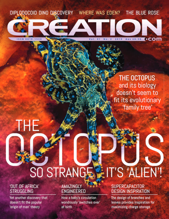 Creation Magazine Volume 41 Issue 2 Cover