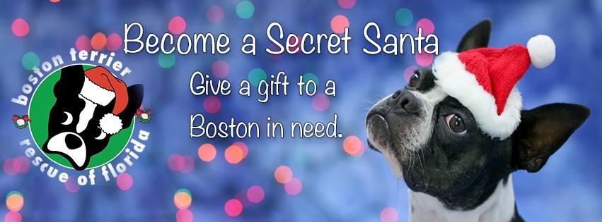 Boston Terrier Rescue Of Florida Secret Santa Donationmatch