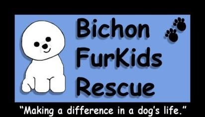 Bichon Bash Fundraiser for Bichon Furkids Rescue