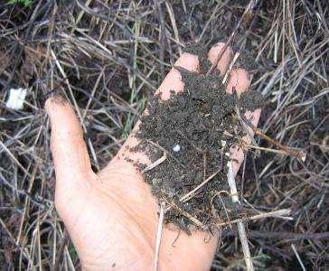 "Good soil under crop residue soils."" The principles are and mucuna mulch, Honduras"